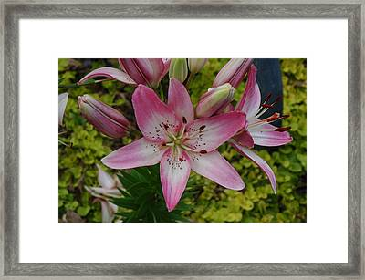 Framed Print featuring the photograph Lily Hearts by Kicking Bear  Productions