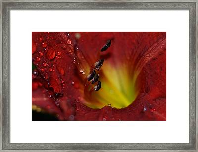 Framed Print featuring the photograph Lily by Heidi Poulin