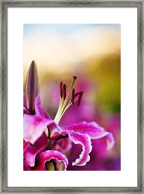 Lily Impression Framed Print by Mike Reid