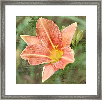 Lily In A Haze Framed Print