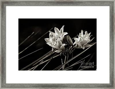 Lily In Monochrome Framed Print