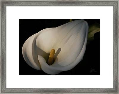 Lily In Shadow Framed Print by S Lynn Lehman