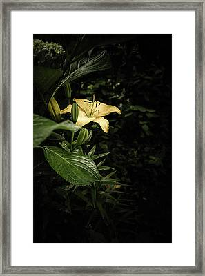 Framed Print featuring the photograph Lily In The Garden Of Shadows by Marco Oliveira