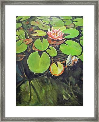 Lily In The Water Framed Print