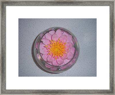 Lily In Vase Framed Print by Conor Murphy