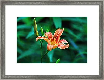Lily In Woods Framed Print