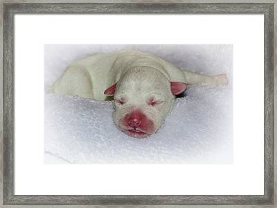 Lily Framed Print by Jim Cook
