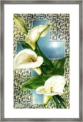Lily Framed Print by Kenneth Lambert