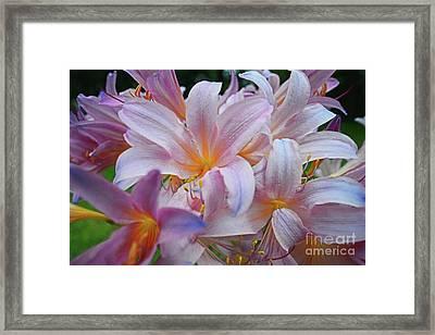 Lily Lavender Closeup Framed Print