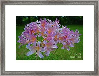 Lily Lavender Framed Print