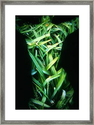 Lily Leaves Framed Print by Arla Patch