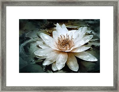 Lily Light Framed Print by Joel Payne