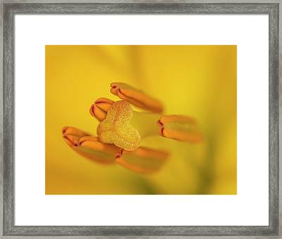 Lily Love Framed Print by Roy McPeak
