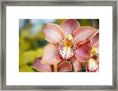 Lily-like Lovelies  Framed Print