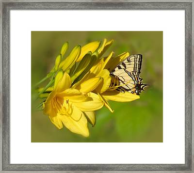 Lily Lover Framed Print