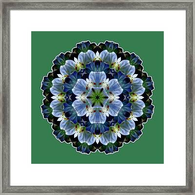 Lily Medallion Framed Print