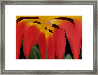 Lily Melting Framed Print