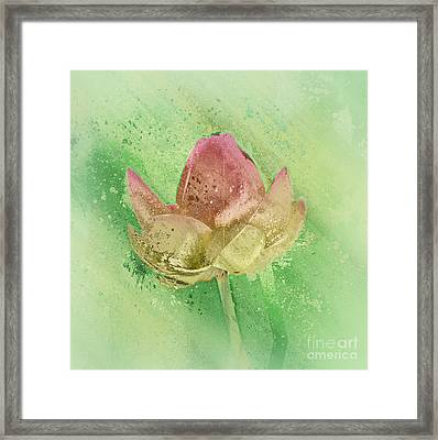 Lily My Lovely - S112sqc88 Framed Print by Variance Collections