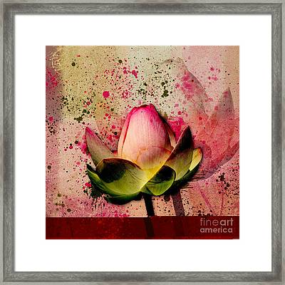Lily My Lovely - S23asq Framed Print by Variance Collections