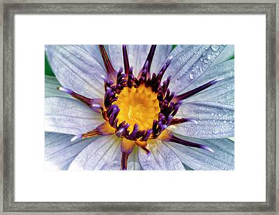 Lily Not Quite In Focus Framed Print