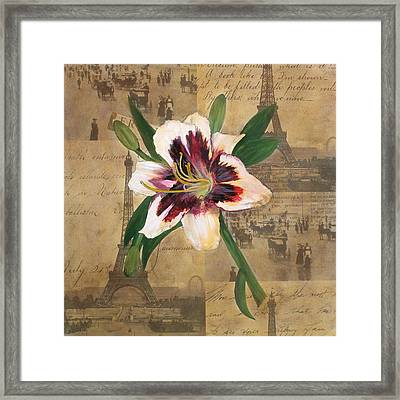 Lily Of France Framed Print by Carrie Jackson