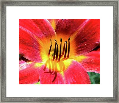 Lily Of Red Framed Print by Larry Bishop