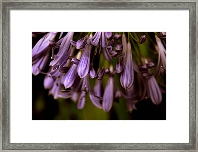 Lily Of The Nile Framed Print by Jessica Jenney