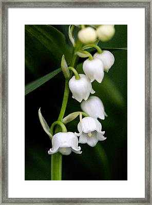 Lily Of The Valley Framed Print by Bobbi Smith