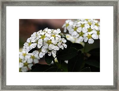 Lily Of The Valley Bush Framed Print