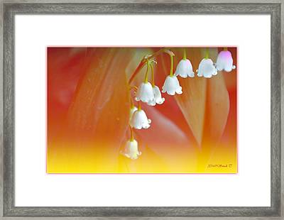 Lily Of The Valley Framed Print by Sonali Gangane