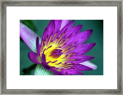 Lily On The Water Framed Print by Brad Granger