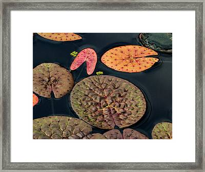 Lily Pad Abstract Framed Print by Jean Noren