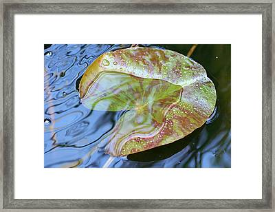 Lily Pad On The Pond Framed Print by Kerry Reed