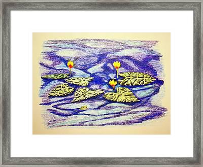 Lily Pad Pond Framed Print