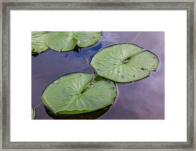 Lily Pad Reflections Framed Print