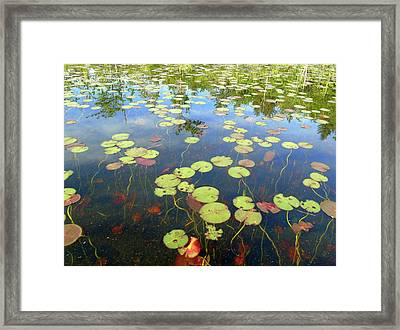 Lily Pads And Reflections Framed Print by Susan Lafleur
