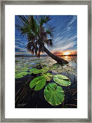 Lily Pads And Sunset Framed Print