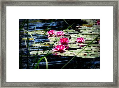 Lily Pads And Wildflowers Framed Print