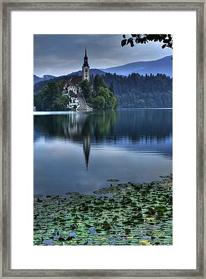 Lily Pads At Lake Bled Framed Print