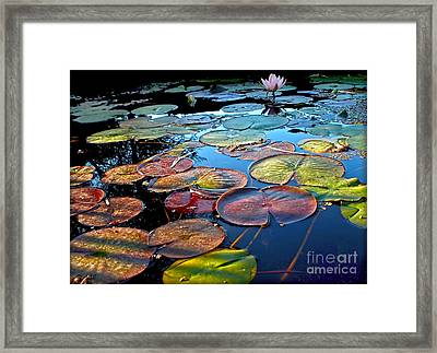 Lily Pads At Sunset Framed Print by Kaye Menner