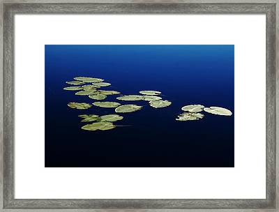 Lily Pads Floating On River Framed Print by Debbie Oppermann