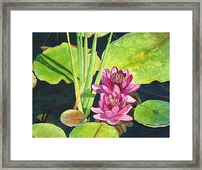 Lily Pads Framed Print by Sharon Farber
