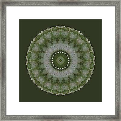 Lily Plaid Framed Print