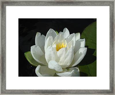 Framed Print featuring the photograph Lily Pond by Christie Minalga