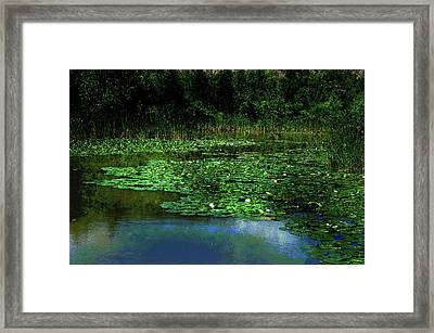 Framed Print featuring the photograph Lily Pond by Elaine Manley