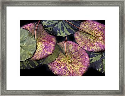 Lily Pond Jewels Framed Print by Jessica Jenney