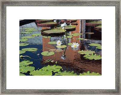 Framed Print featuring the photograph Lily Pond Reflections by Suzanne Gaff