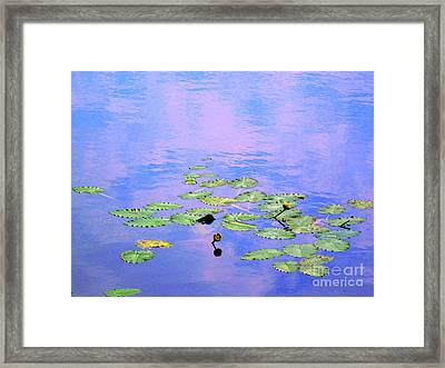 Laying Low Like A Lily Pond  Framed Print