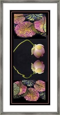 Lily Pond Triptych II Framed Print by Jessica Jenney