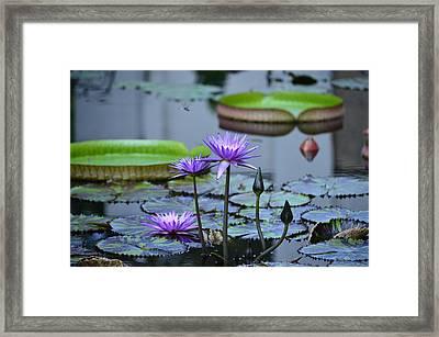 Lily Pond Wonders Framed Print by Maria Urso